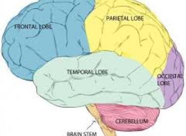 Εφηβεία - Εθισμοί και ωρίμανση του εγκεφάλου